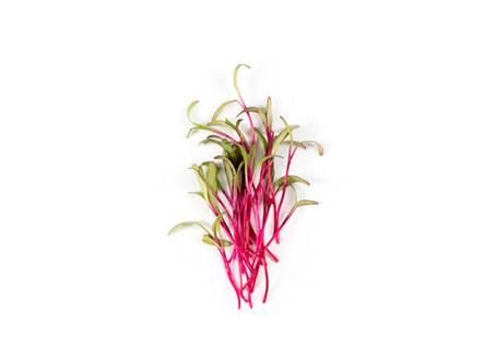 Colorful Microgreen Varieties
