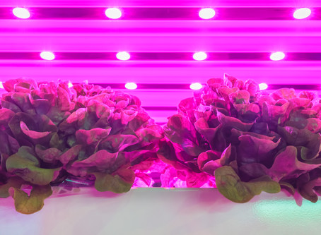 The Best Indoor Herb Grower To Start Your At-Home Garden