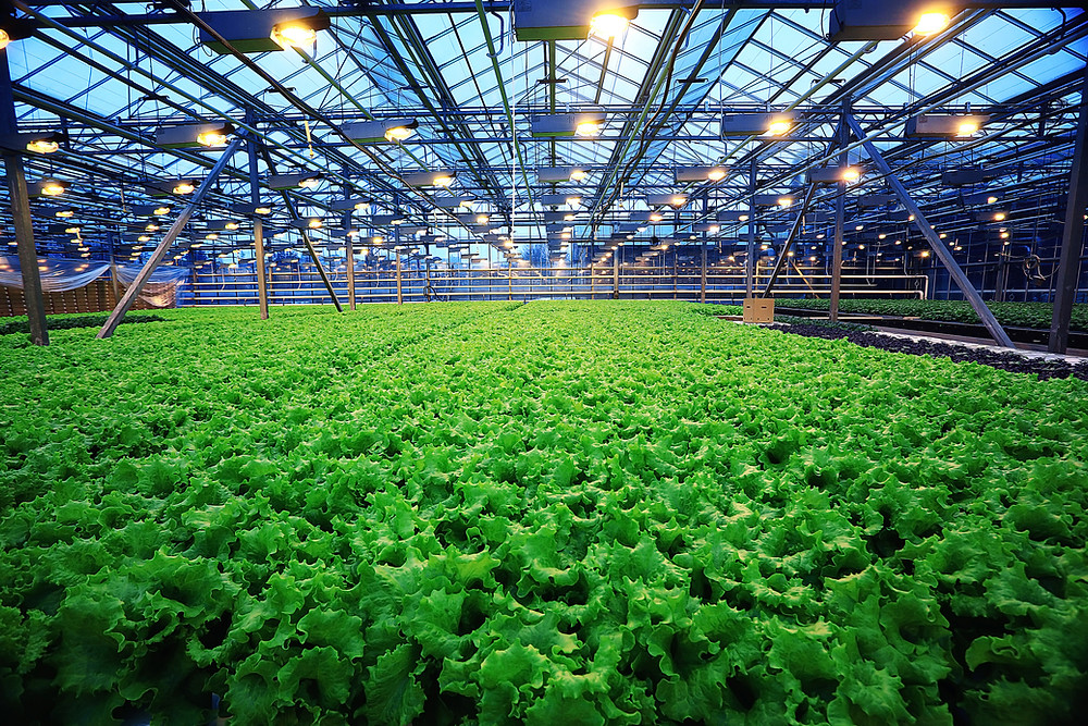 Hydroponics farm in Chicago