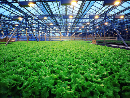 Hydroponics for Beginners 101: The Basics
