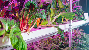 10 Crops You Can Grow at Home: Hydroponic Growing