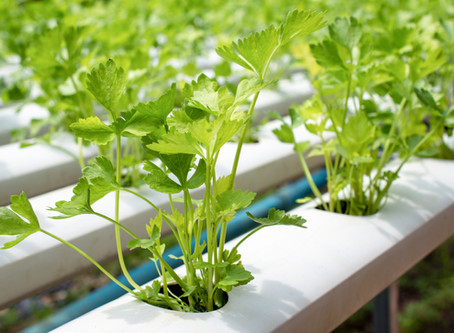Hydroponic Propagation: A Webinar Event You Don't Want to Miss