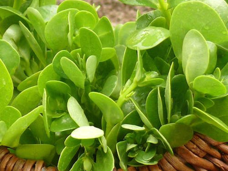What to do with microgreens