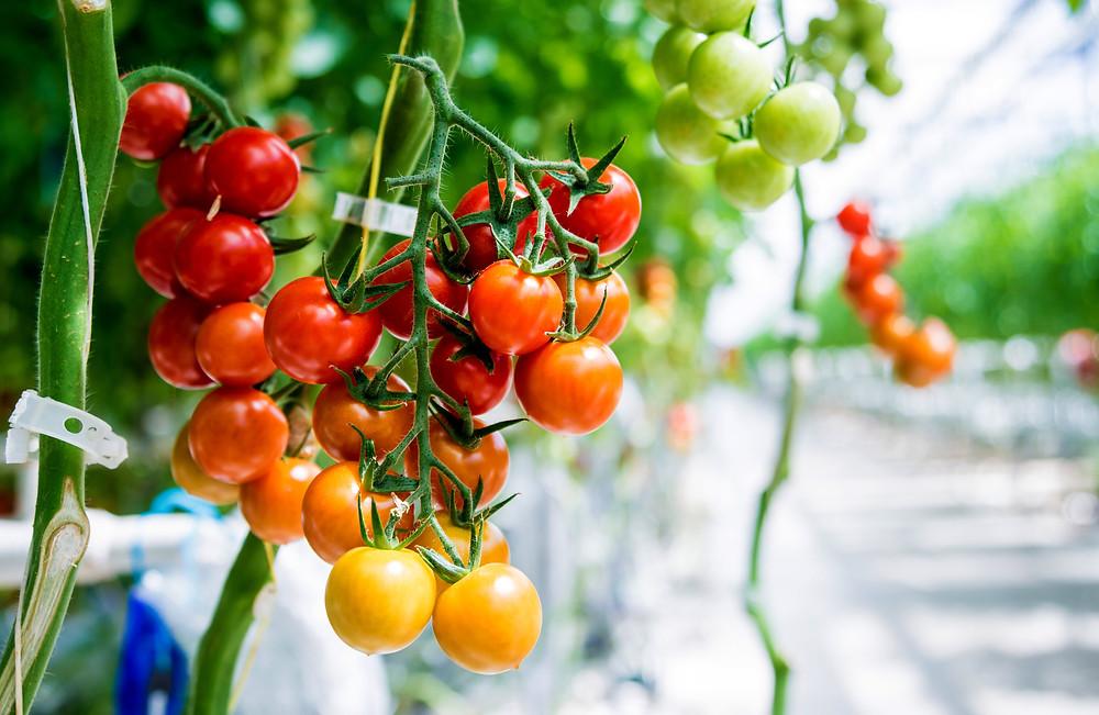 Hydroponic greenhouse farmer