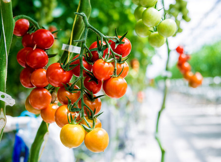 Greenhouse Farming Vs. Vertical Farming: What's the Difference?