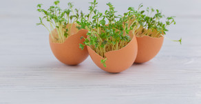 How to stay healthy and grow microgreens at home