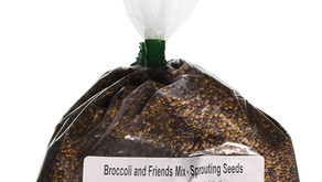 Buying seed for microgreens
