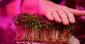 The Best Growing Mediums for Microgreens