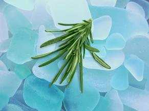 All'ombra del salice: prepara il tuo sale al Rosmarino