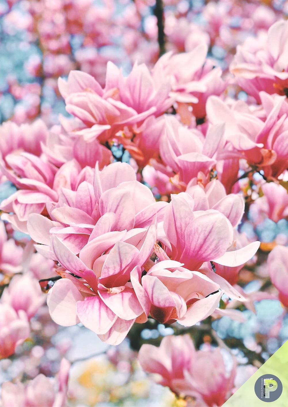 Poesie psicomagiche di primavera -  MAGGIO