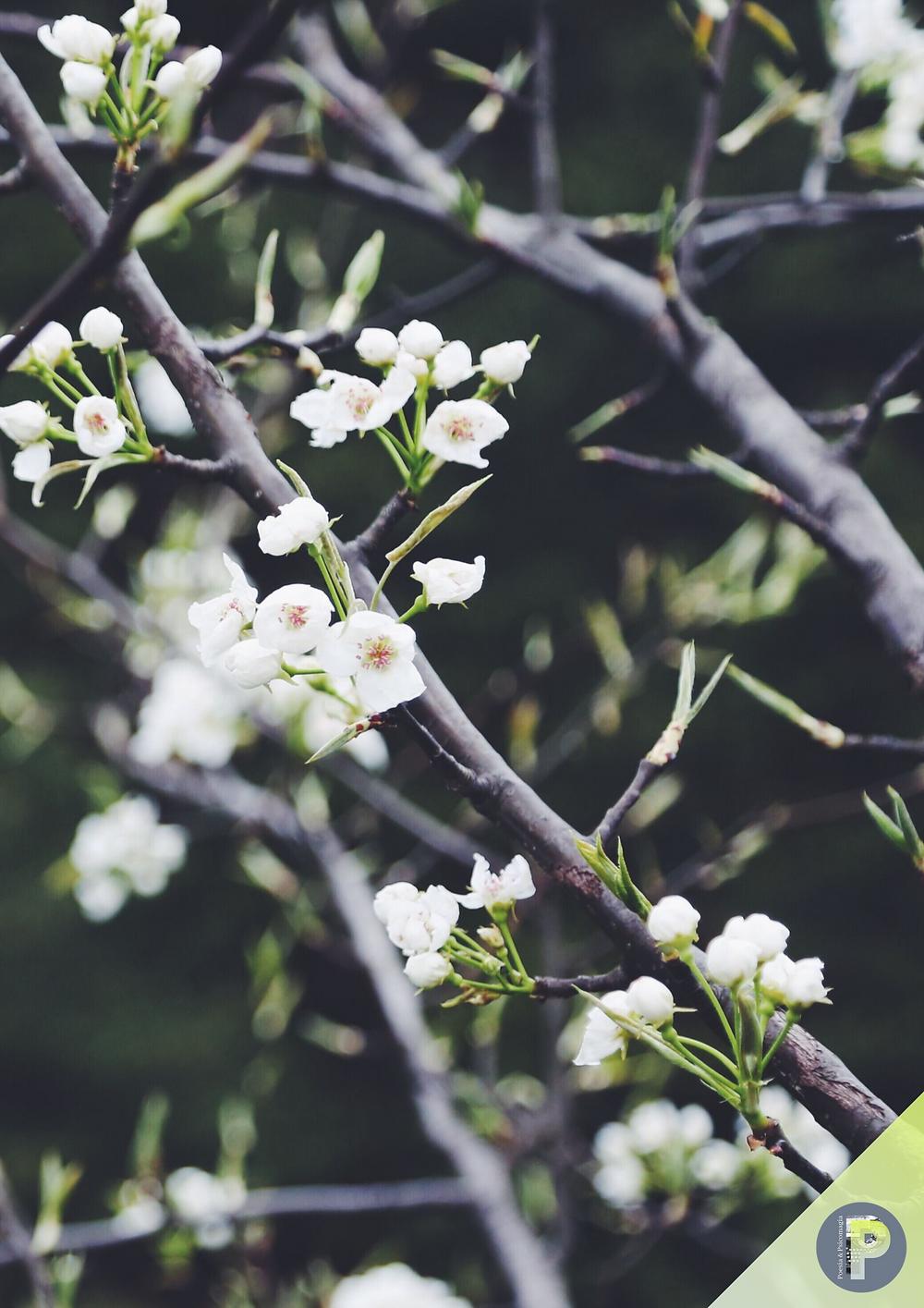 Poesie psicomagiche di primavera -  MARZO