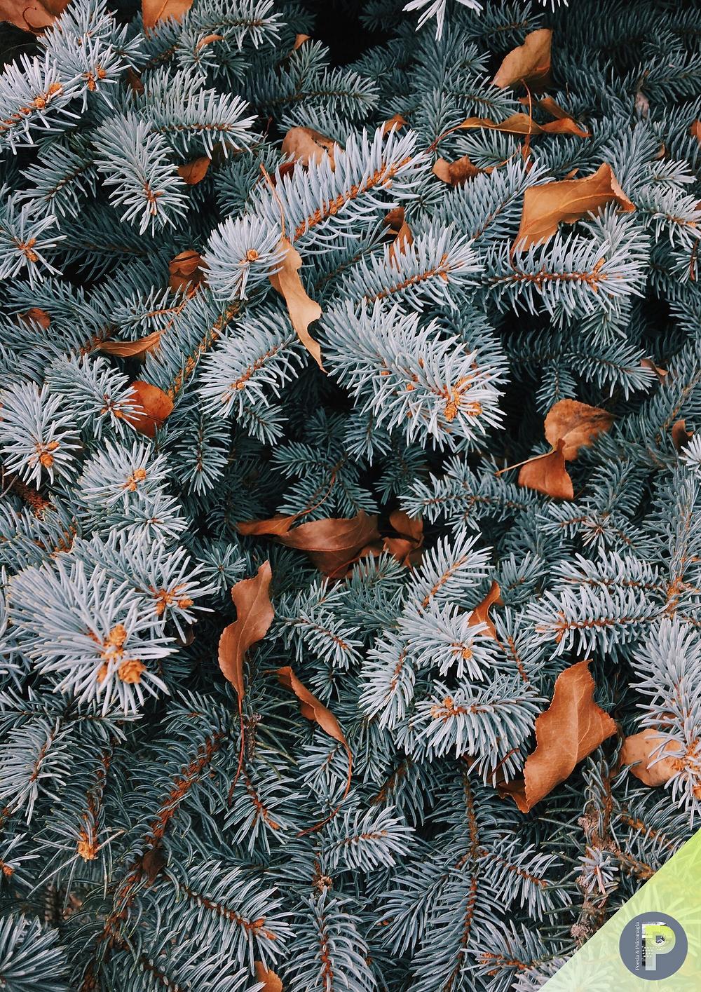 Poesie psicomagiche d'inverno - FEBBRAIO