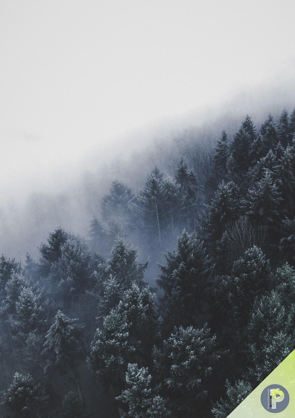 Poesie psicomagiche d'inverno - Gennaio