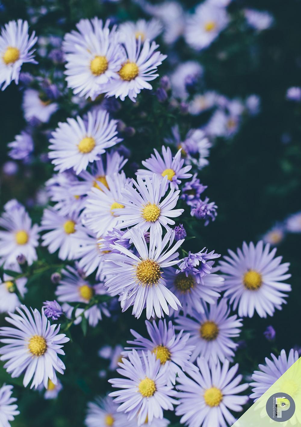 Poesie psicomagiche di primavera -  APRILE
