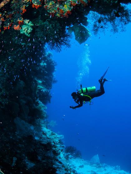 Plongée dans les récifs coralliens