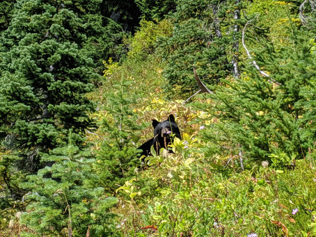 #THRUTRUTH: WILDLIFE ENCOUNTERS ON TRAIL