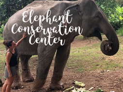 Nuestra experiencia en el Elephant Conservation Center - Laos