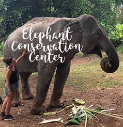 Nuestra experiencia en el Elephant Conservation Center - Laos