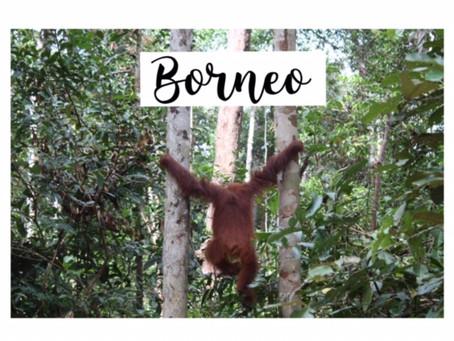 Borneo, tierra de orangutanes. Tres días en la selva.