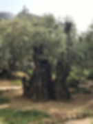 Gethsemane1.jpg