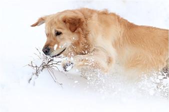 Gaston ve sněhu