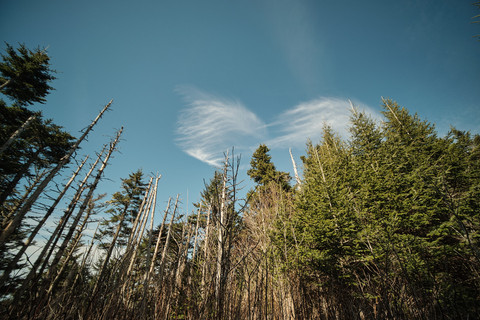 Clouds and woods