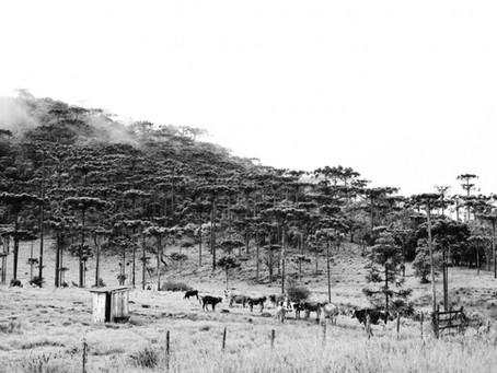 Serra Catarinense: A journey trhough Santa Catarina mountains
