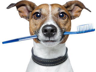 Dental care: The Do's and Don't's for taking care of your pet's bad breath!