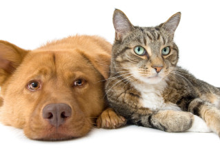 Diabetes and your pet - Better managing the ups and downs