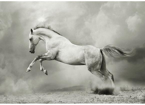 White Horse - A1
