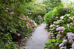 FLOWERY PATH IN VENTNOR.