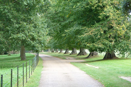 A tree lined drive at Osborne House