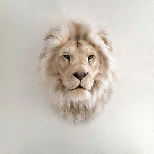 Reproduction Tête de Lion Albinos Africain Faux Taxidermie Mount