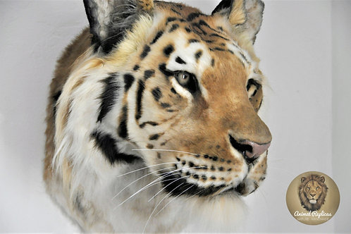 Reproduction Tiger Head Faux Taxidermy Mount