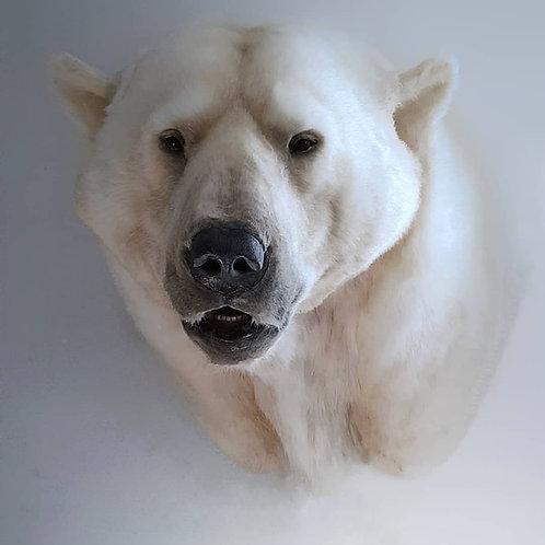 Reproduction Polar Bear faux taxidermy head mount