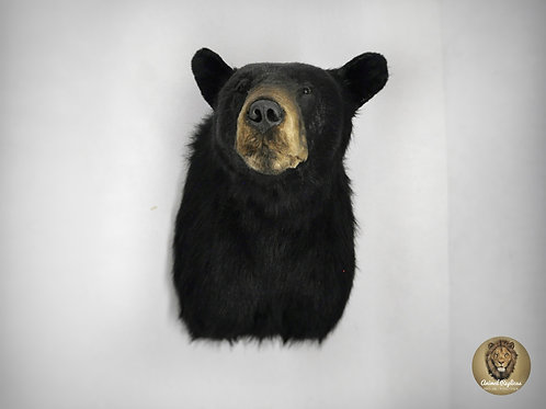 Reproduction Monture de taxidermie d'épaule d'ours noir