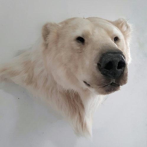 Reproduction Polar Bear faux taxidermy mount