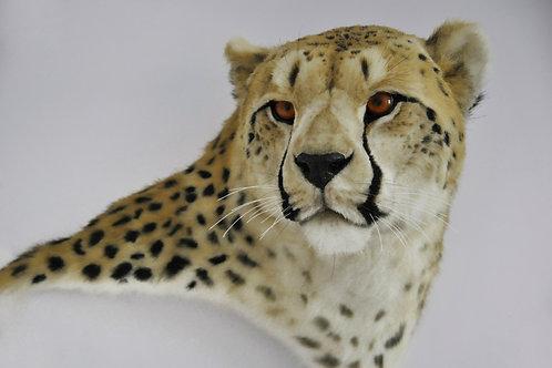 Reproduction Cheetah Head faux taxidermy mount