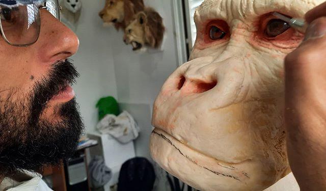 Primate Creation #gorilla #silverbackgor
