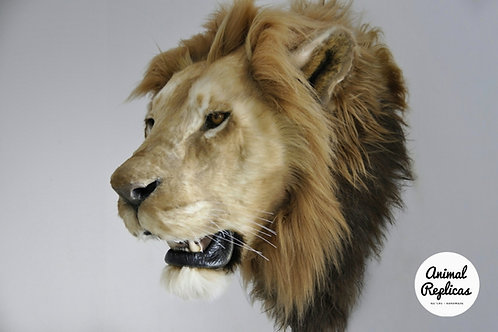 Reproduction African Lion head faux taxidermy mount