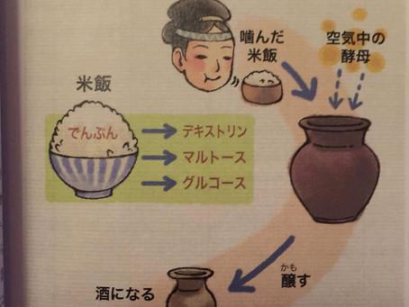 【衝撃の真実?!日本酒の起源について…】