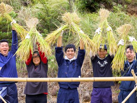 世界遺産登録地の酒米を刈る!!@春日の棚田。平戸市森酒造場のフィランド夢名酒にかわる米。