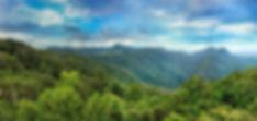 SGC-panama rainforest.jpg