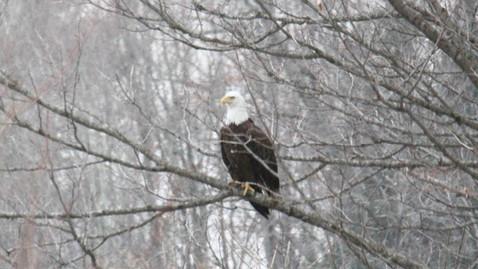ALS-eagle.jpg