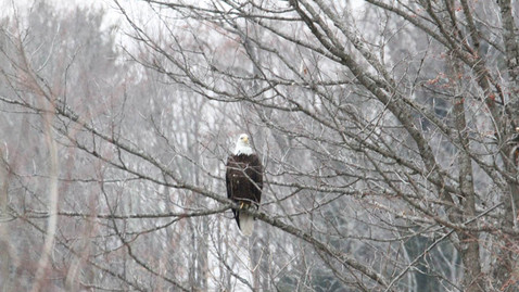 ALS-eagle2.jpg