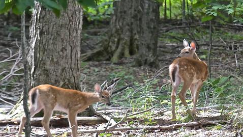 ALS-deer.jpg