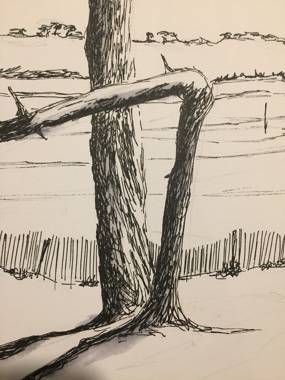 Les troncs à l'encre