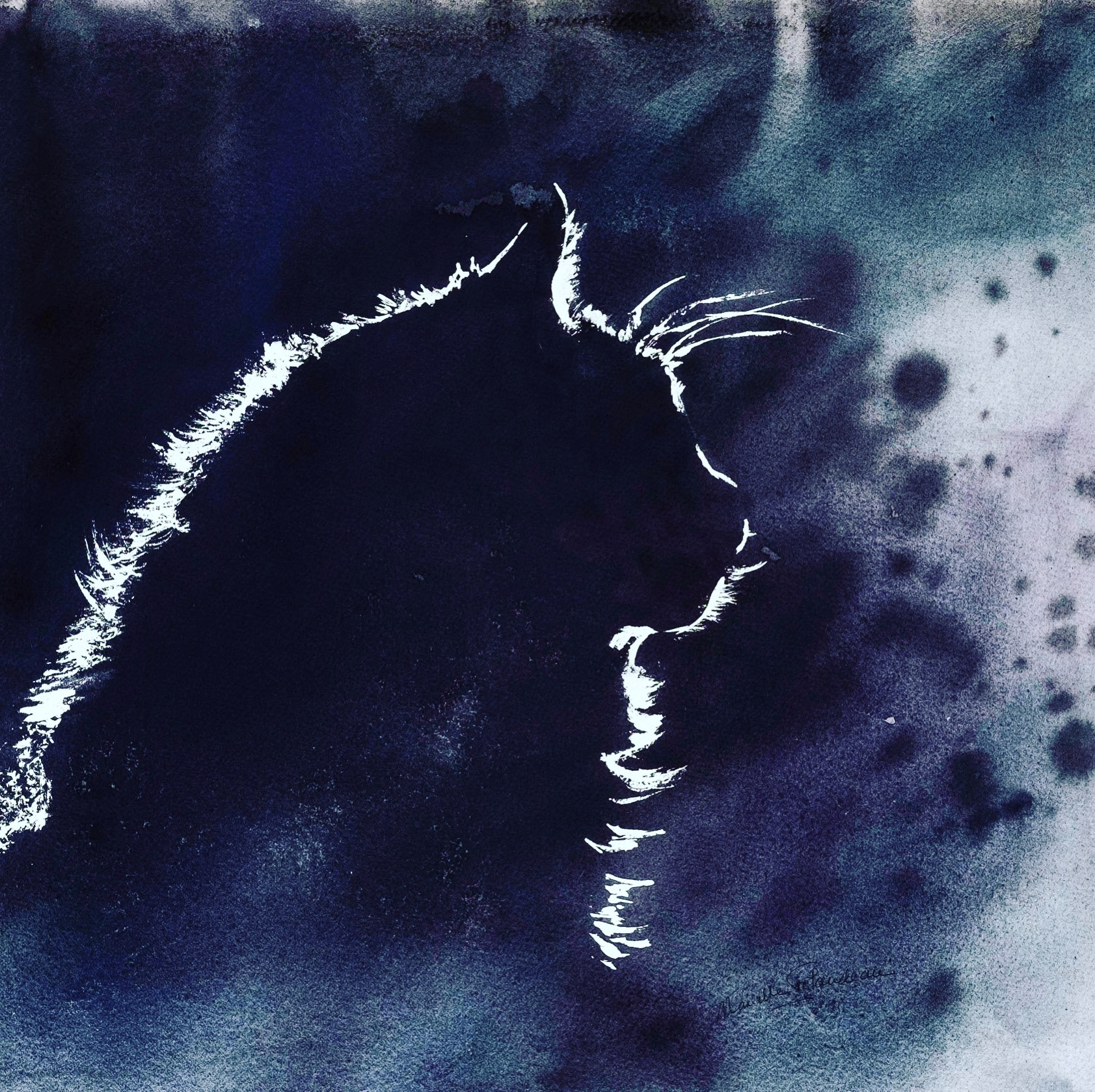 Chat-lumière