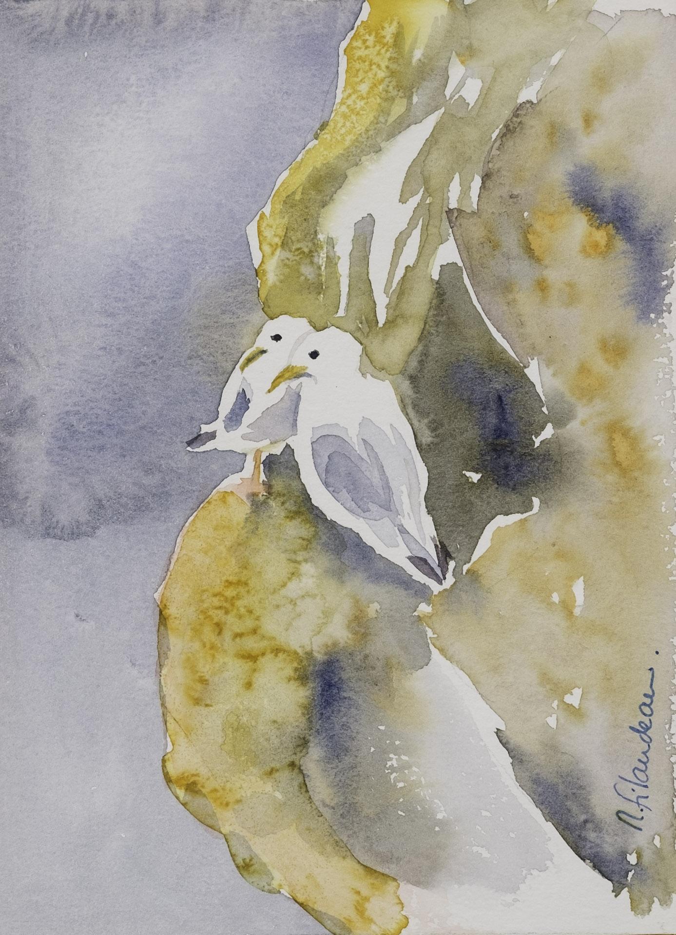 mouettes au nid
