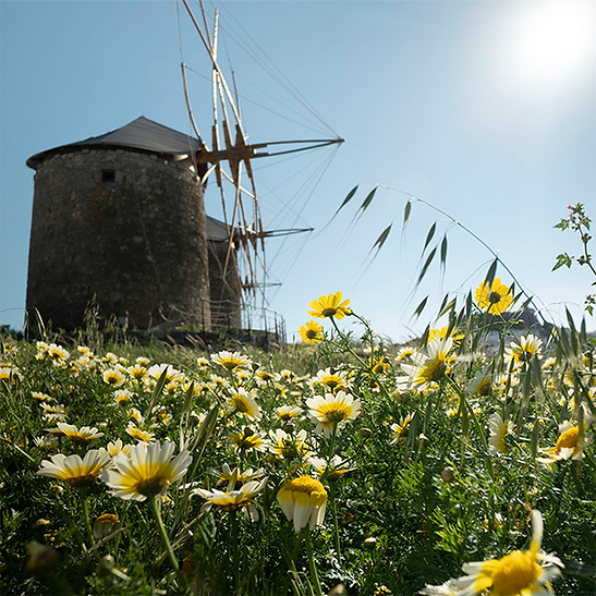 etsy patmos windmill.png